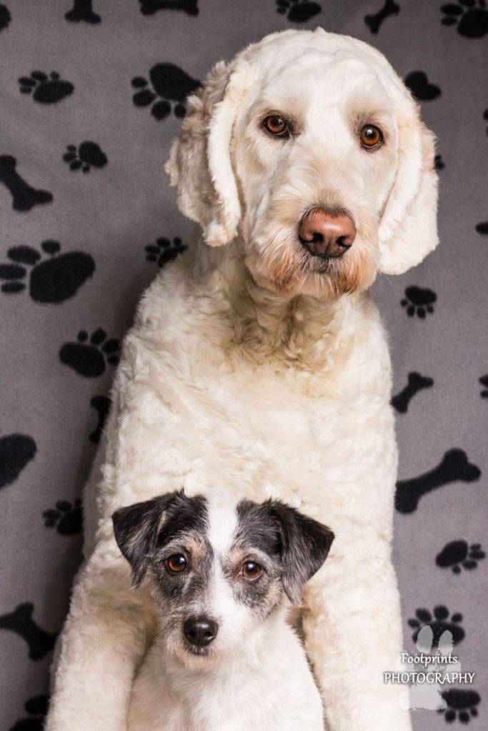 Benno & Kwintie